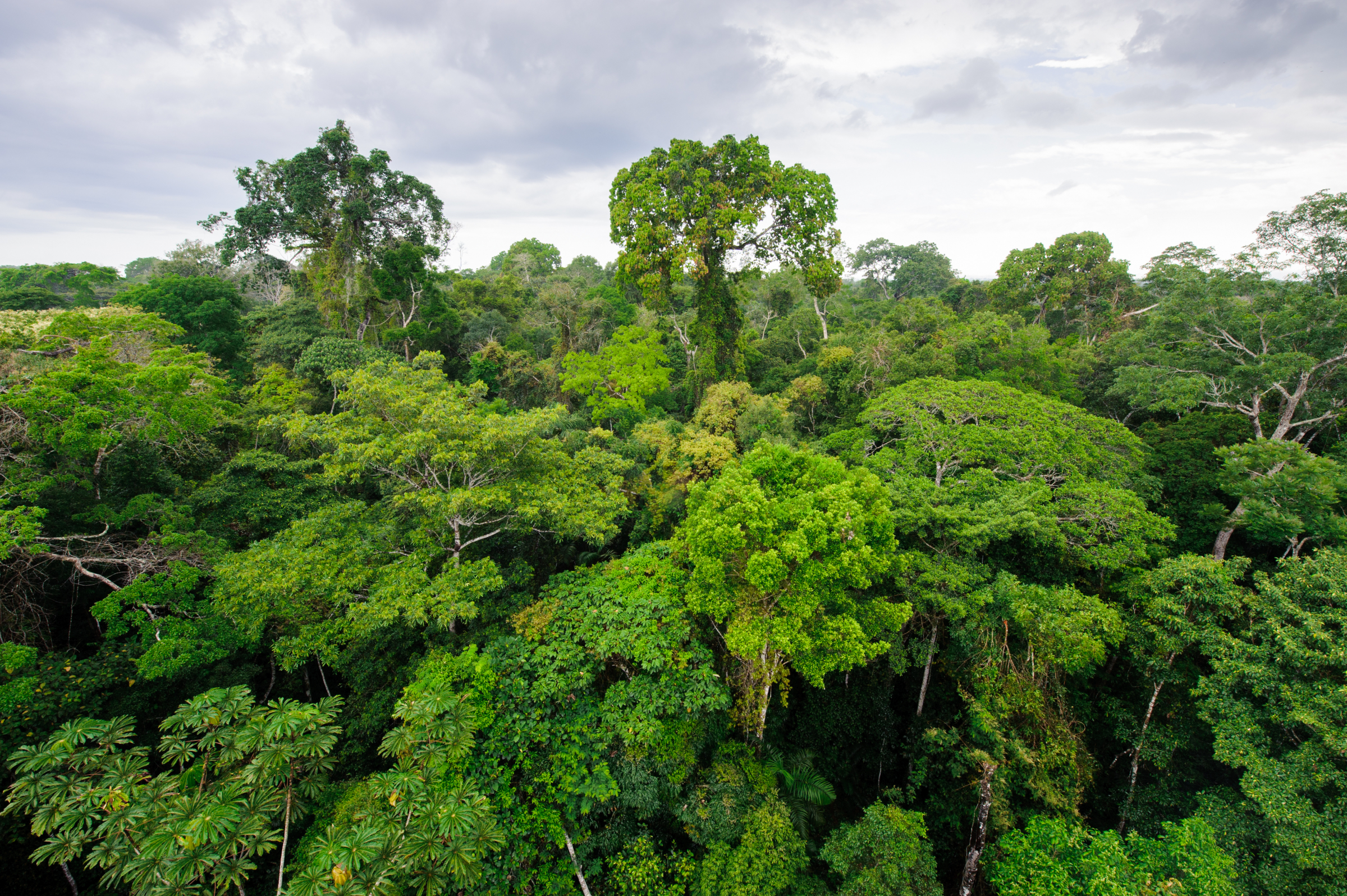 CO2-positiv, CO2-neutral, all i need.-Wald, Portel Pará Forest Conservation Project, ReGreen